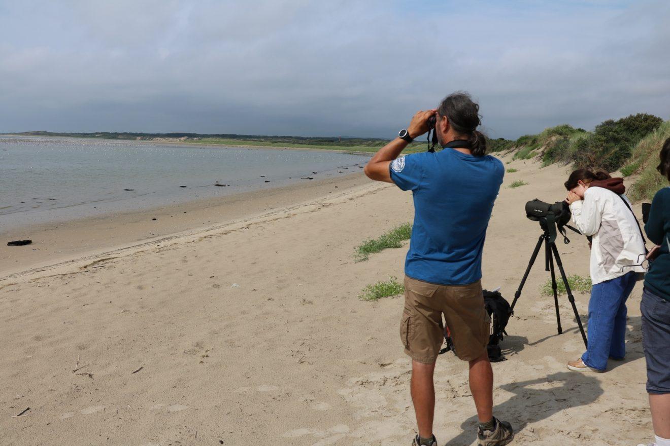 À la découverte des oiseaux en Baie de Canche